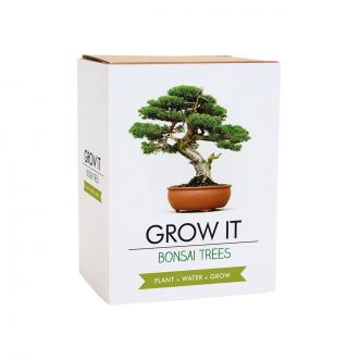 Kit Grow It Bonsai