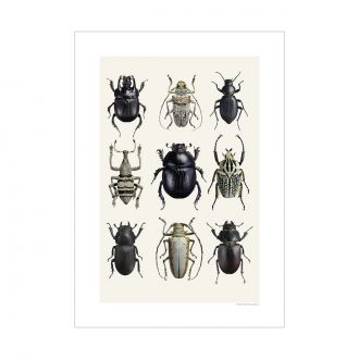 Affiche Insecte Beetles Black & White A4