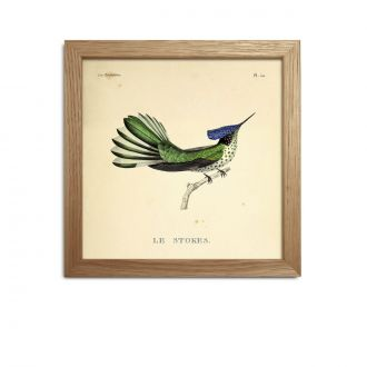 The Stokes Hummingbird + Frame